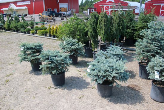 Benjamin Tree Farm