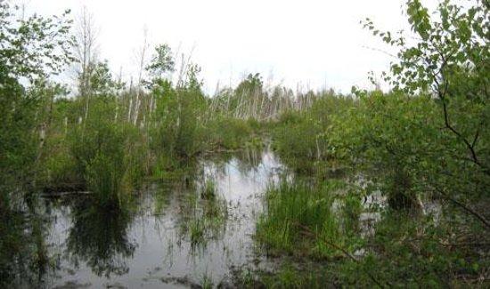Wainfleet Bog Conservation Area