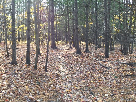 South March Highlands Conservation Forest