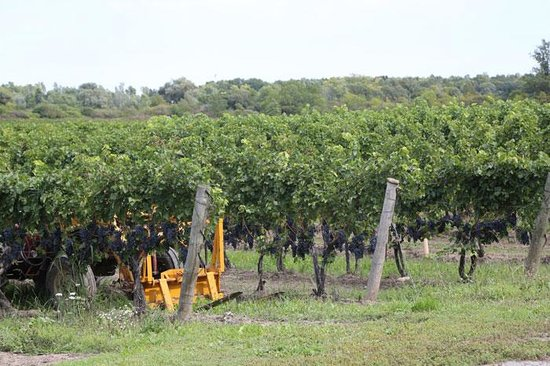 Five Rows Craft Wine of Lowrey Vineyards