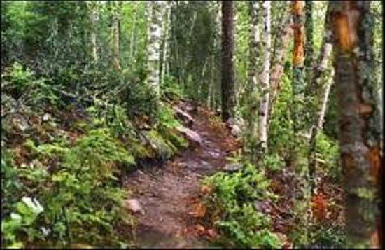 Amisk Hiking Trail