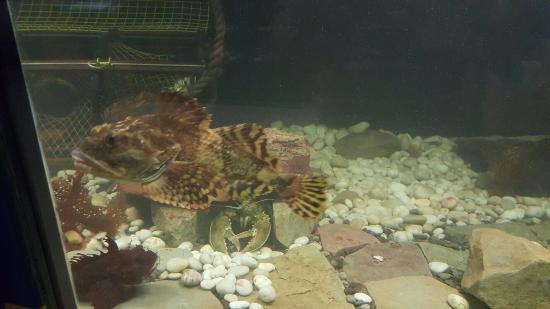 Aquarium des Iles