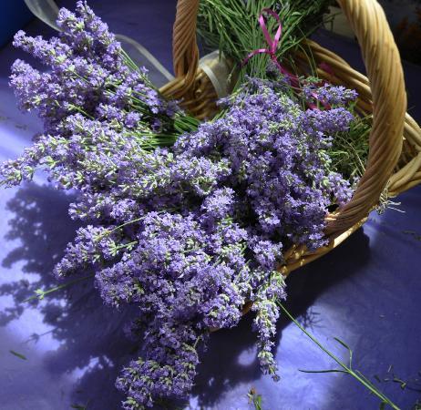 NEOB Lavender – Niagara Essential Oils & Blends