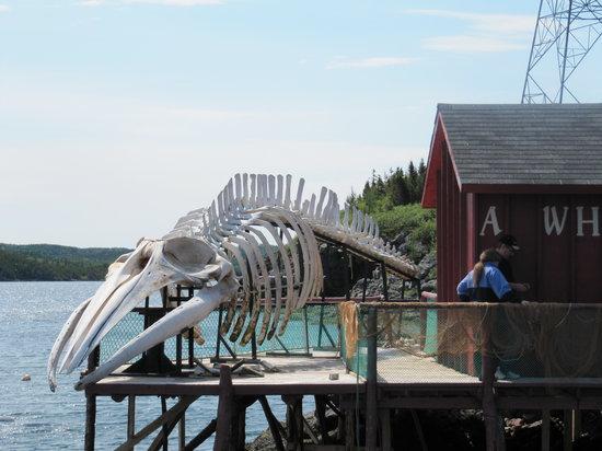 Prime Berth Fishing Museum