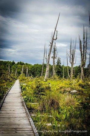 Alert Bay Ecological Park, Alert Bay, British Columbia