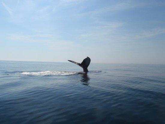 Ocean Explorations Whale Cruises