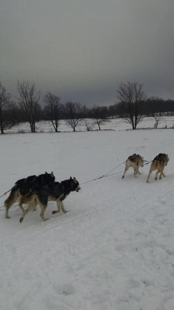 Rob Roy Farm – Snow Dogs