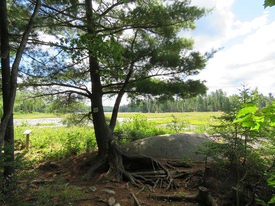 Marten River Provincial Park