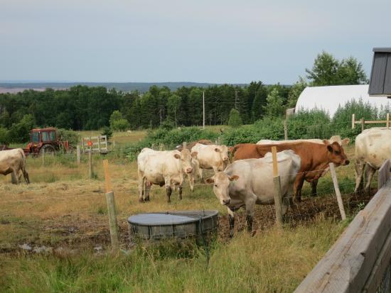 That Dutchman's Farm